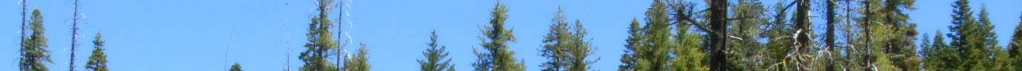 Bills, Statutes, Rules and Annual California Forest Practice Rules Photo